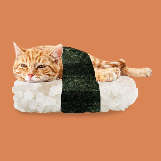 Cat Sushi by Mook