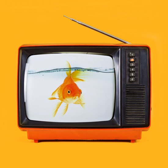 Fish TV by Mook