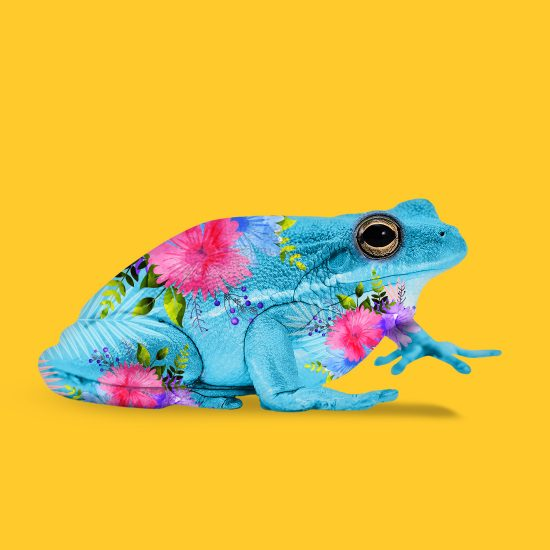 Jungle Frog by Mook