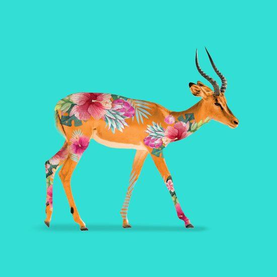 Jungle Impala by Mook